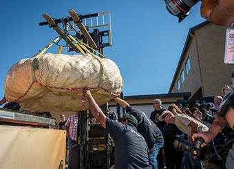 forklift placing giant pumpkin on official 5-ton capacity scale at 2015 Pumpkin Weigh-Off