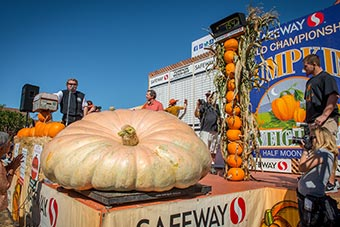 2015 Weigh-off 1547 lb pumpkin on the scale