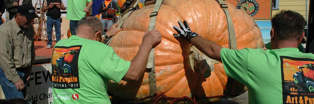 pumpkins contending for the world record prize