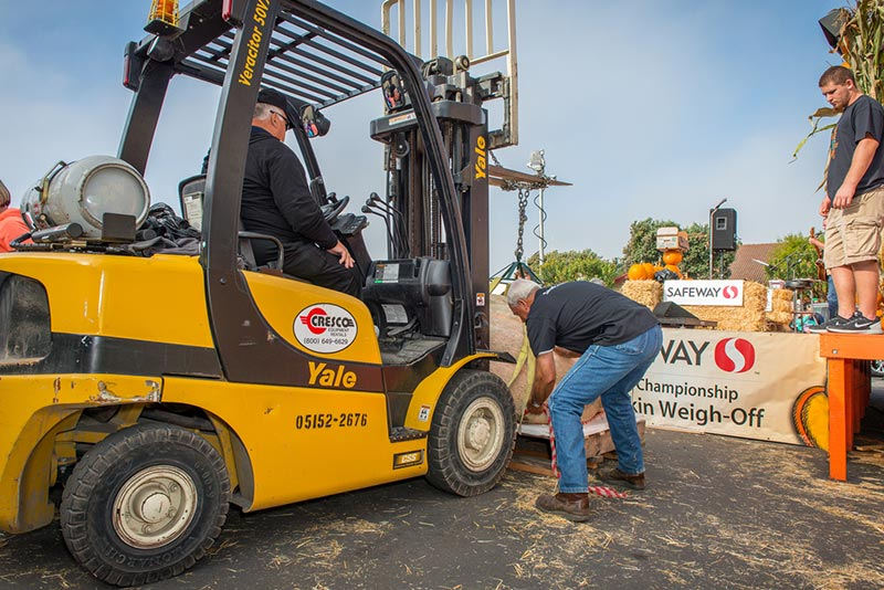 2015 Weigh-off forklift prepares to lift giant pumpkin