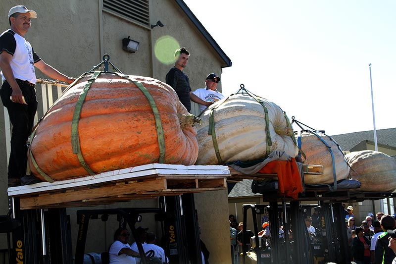 2018 Pumpkin Weigh-Off top 4 giant pumpkins